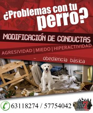 Adiestramiento canino a-7 entrenamiento de perros obediencia basica
