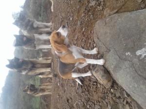 Adiestramiento canino (perro obediente) a domicilio $90.000